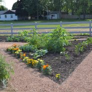 Family Care Center's Garden is Thriving